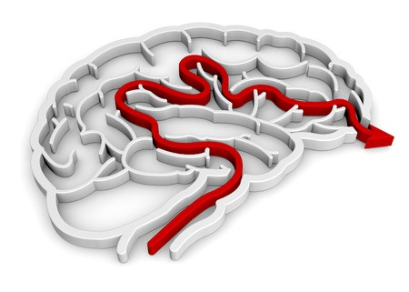 El cerebro y el dolor